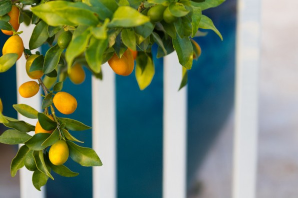Kumquats. Orange is opposite blue on the color wheel. A great color combination.