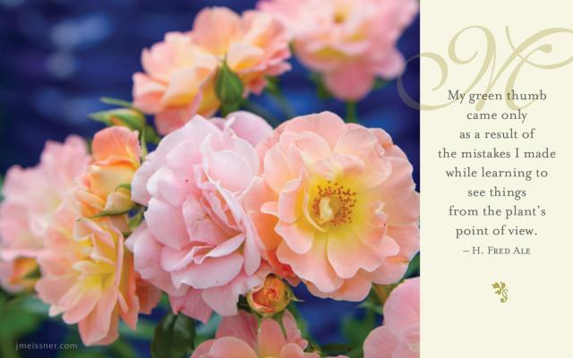 jmeissner.com.RosesCover