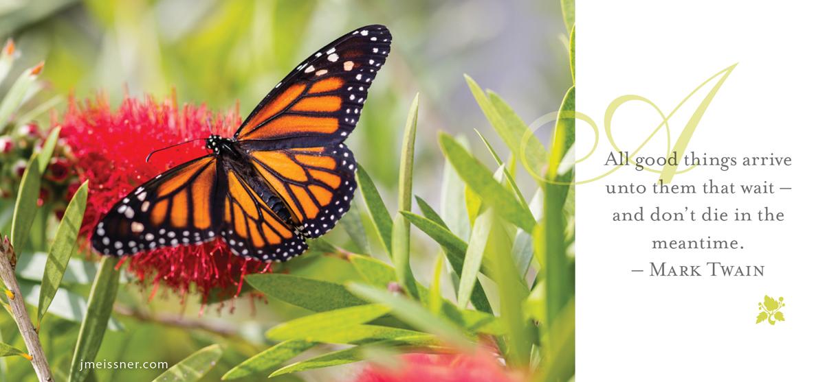 jmeissner.com.butterfly
