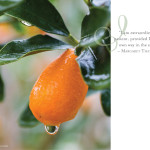 jmeissner.com.kumquat