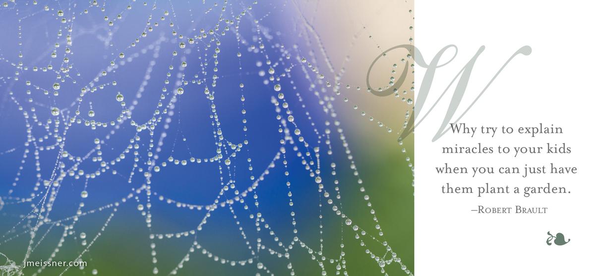 jmeissner.com.spiderweb