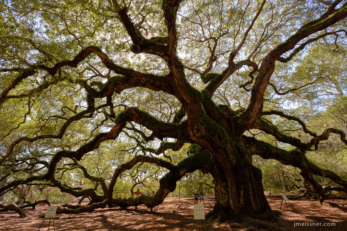 Angel Oak Brad Meissner