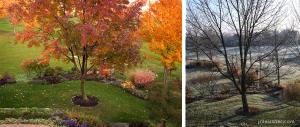 Fall & Winter Ash