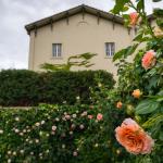 Chateau St Jean Peach Rose